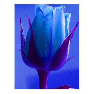 Postal color de rosa azul del placer -