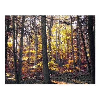 Postal colorida blanco y negro del otoño