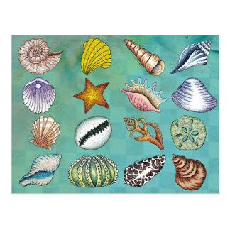 Postal colorida del Seashell