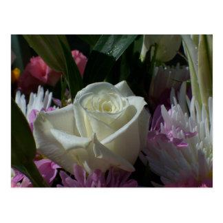 Postal Comienzo del amor como rosa blanco