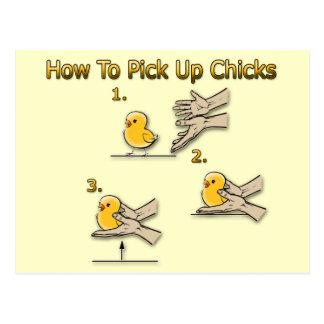 Postal Cómo coger direcciones divertidas de los polluelos
