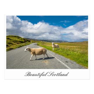 Postal con las ovejas en Escocia