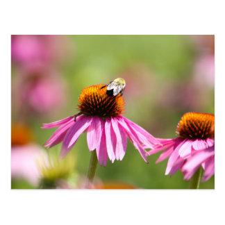 Postal Coneflower y abeja de la miel
