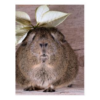 Postal Conejillo de Indias gris lindo que lleva un gorra