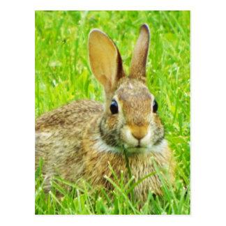 Postal conejo