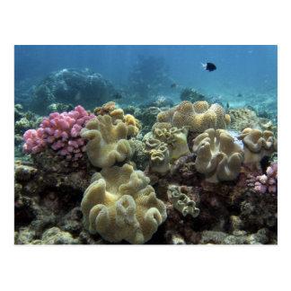 Postal Coral, filón de Agincourt, la gran barrera de