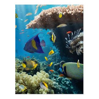 Postal Coral y pescados en el Mar Rojo, Egipto