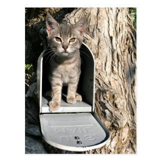 Postal Correo del gatito