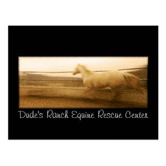 Postal corriente del caballo