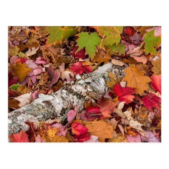Postal Corteza de abedul de la cubierta de las hojas de