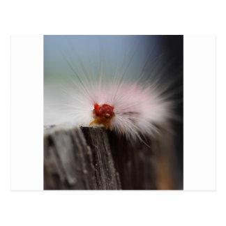 Postal Cosas del enregistramiento de Caterpillar hacia