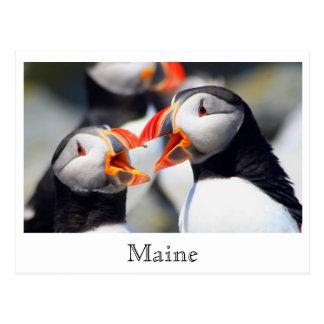 Postal Costa de Maine de los frailecillos atlánticos