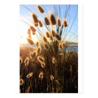 Postal Costa de Nueva Zelanda de los wildflowers de la