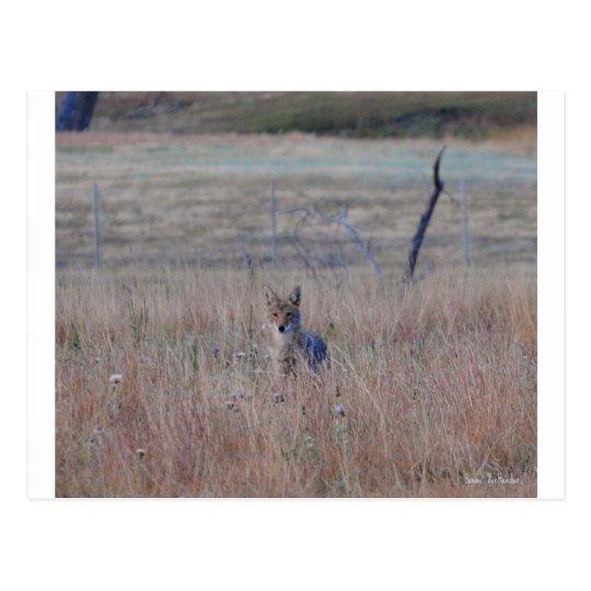 Postal Coyote en el parque nacional de la cueva del