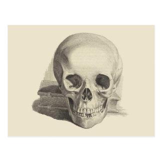 Postal Cráneo y libro