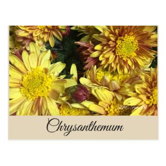 Postal - crisantemo