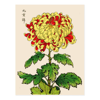 Postal Crisantemo del japonés del vintage. Amarillo de la