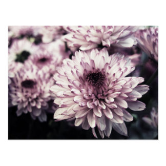 Postal Crisantemo I
