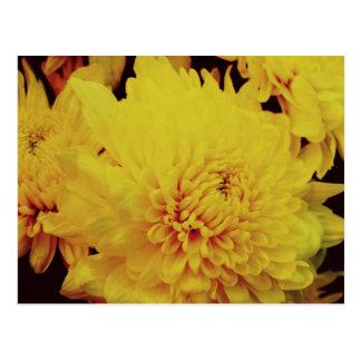 Postal Crisantemo II