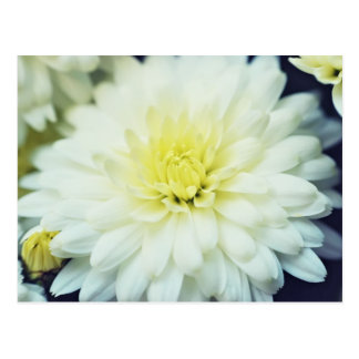 Postal Crisantemo texturizado