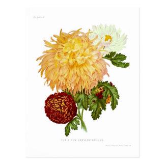 Postal Crisantemos