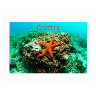 Postal Croacia - vida marina