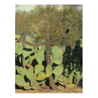 Postal cruciforme del cactus