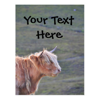 Postal Cuerno largo de la vaca del ganado del pelo largo