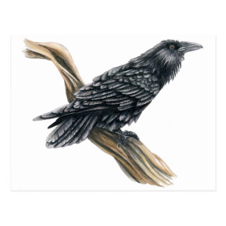 Postal Cuervo