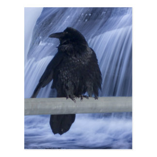 Postal Cuervo encaramado sobre una cascada