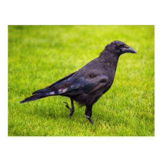 Postal Cuervo negro