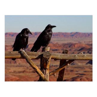 Postal Cuervos del desierto