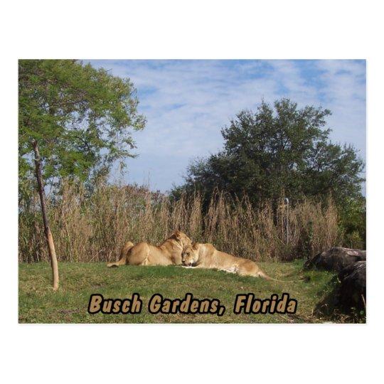 Postal de abrazo de los leones