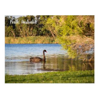 Postal de Australia del cisne negro de Perth