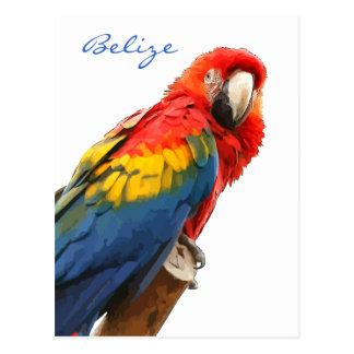 Postal de Belice del Macaw del escarlata