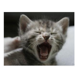 Postal de bostezo del gatito