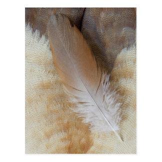 Postal De Brown del ganso todavía de la pluma vida