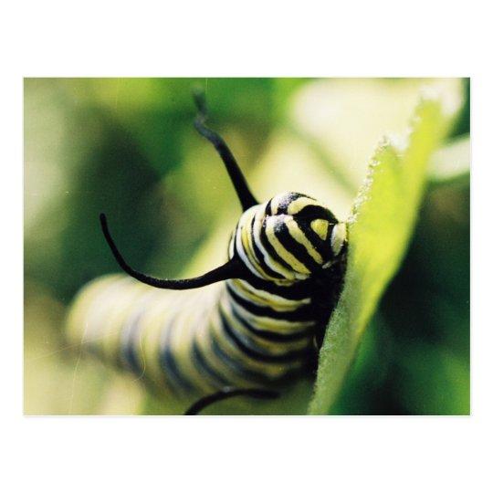 Postal De Caterpillar cierre para arriba y personal