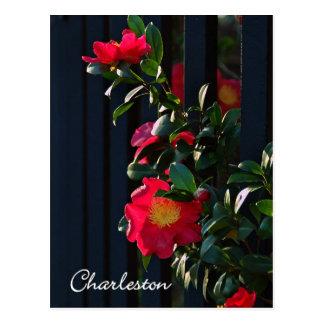 Postal de Charleston Camelia