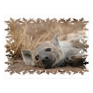 Postal de imagen del Hyena