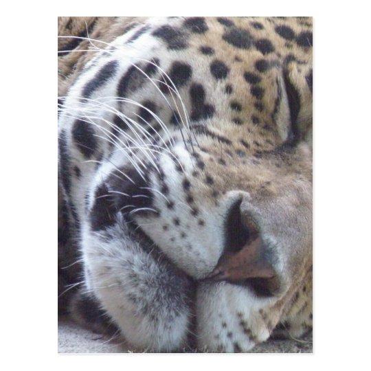 Postal de imagen del leopardo
