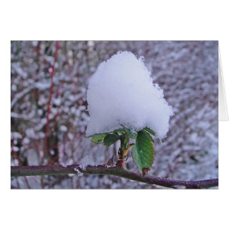 Postal de invierno Schneeplfanze apuesta, en