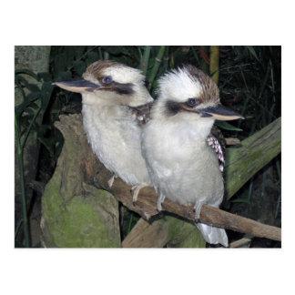 Postal de Kookaburras