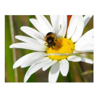 Postal de la abeja y de la margarita