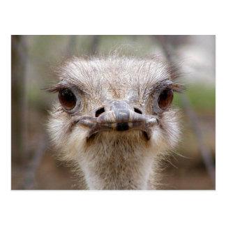Postal de la cara de la avestruz