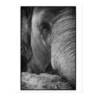Postal de la cara del elefante asiático