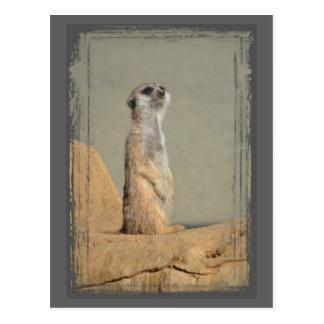 Postal de la colección de Meerkat