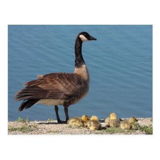 Postal de la familia del ganso