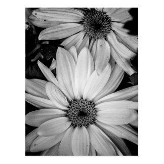 Postal de la flor
