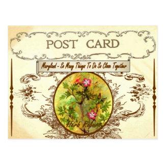 Postal de la flor de estado de Maryland del